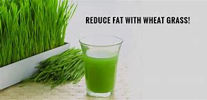 wheatgrass for losing weight,wheatgrass powder for losing weight,wheatgrass and weight loss,
