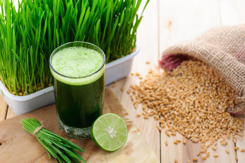 wheatgrass growing,wheatgrass grower,stop mold on wheatgrass,how to stop mold growing on wheatgrass,wheatgrass growing tips,wheatgrass growing tutorial